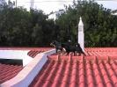 Auf dem Dach
