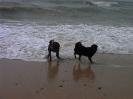 Amorina am Meer