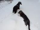 Bunte Hunde