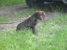 Safir am Hundelehrgang